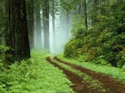 path-jpeg