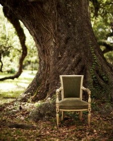 chair near oak tree